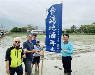 花莲「吉野1号」米復育成功 可望再现台湾地酒「神迹」
