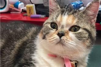 职场》上班也能吸狗撸猫!幸福企业推毛孩宠物日