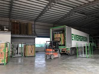 雲林農團克服冷藏挑戰 外銷2貨櫃高麗菜到加州