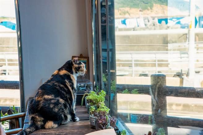 店內的其中一隻貓六例是支自來貓,會挑客人撒嬌。(請勿強行抱貓咪)(圖/行遍天下提供)