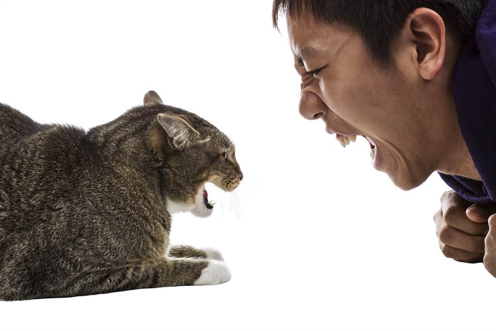 大陸一名舍監因為流浪貓在校內亂叫,忍不住爆氣開罵。(示意圖/達志影像)
