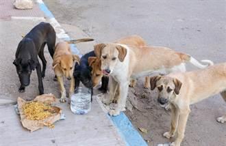 流浪狗群圍攻小姊妹 3歲女童被忘在原地慘遭分屍