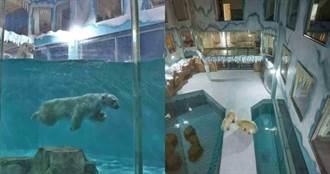 哈爾濱酒店裡飼養北極熊 推出「與熊共眠」活動遭抨擊