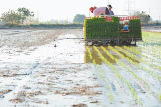 缺水休耕 農民憂影響後續交貨