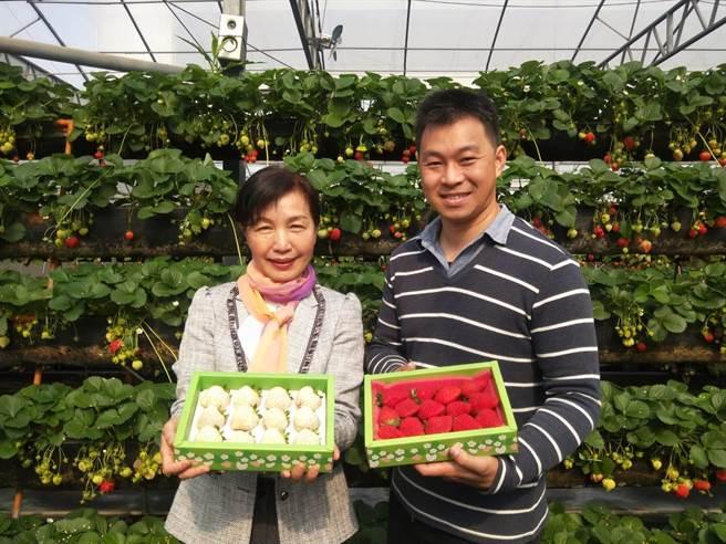 總幹事王秝毅(左)表示,看到沐光農場栽培的草莓又大又甜,黃文慶(右)的努力終於有成果。(陳淑娥攝)