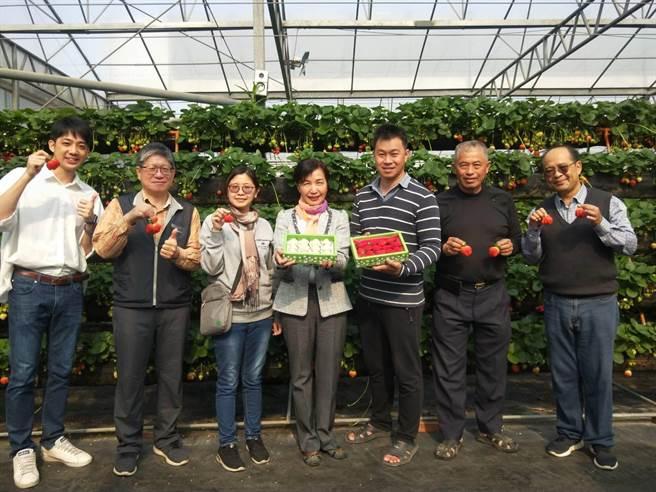 黃文慶努力經營精品草莓園,終於有不錯成果。(陳淑娥攝)