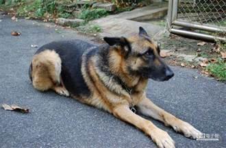 飼主遛狗嚇到人害摔傷 關鍵動作不起訴