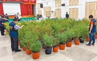 種大麻自用 修法降刑 政院今通過