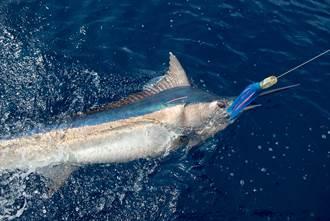漁夫釣到巨無霸魚大方請全村吃 網見照片傻了:這條值千萬