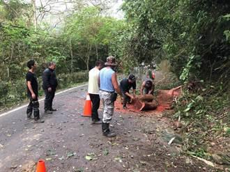 路樹倒塌影響交通  苗栗東河村警民共同合作排除