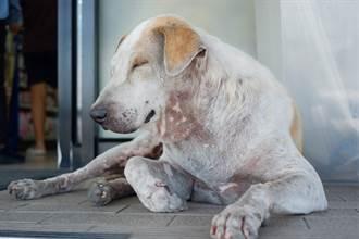流浪狗跑到醫院門前狂招手 獸醫秒懂驚呼:太有靈性