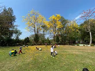 台南編列2000萬元推動校園染病樹木防治