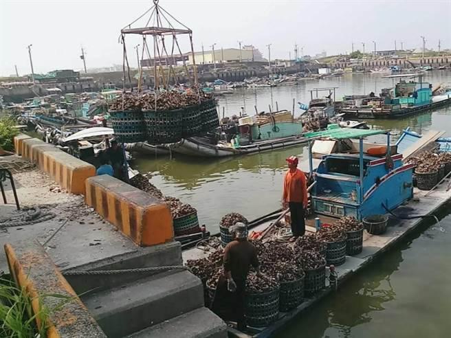 嘉縣獲漁業署補助3600萬元 協助吊蚵機與蚵架作業平台換新 - 寶島