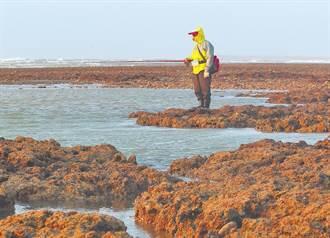 藻礁公投近70萬份連署書 堅持「非核減煤救藻礁」