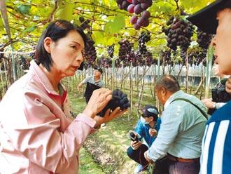 全民瘋鳳梨 葡萄遭冷落跌價2成