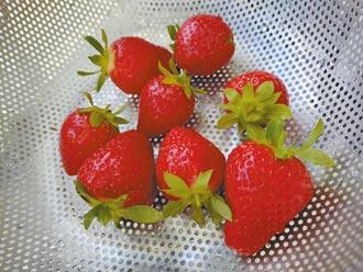 呷草莓正當季 C出青春活力