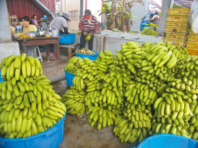蔡英文總統才剛宣布台灣香蕉將進軍東奧,昨日就傳出農藥超標6倍遭日方下架回收,農委會一開始還狀況外害小英丟臉。(示意圖,本報資料照片)