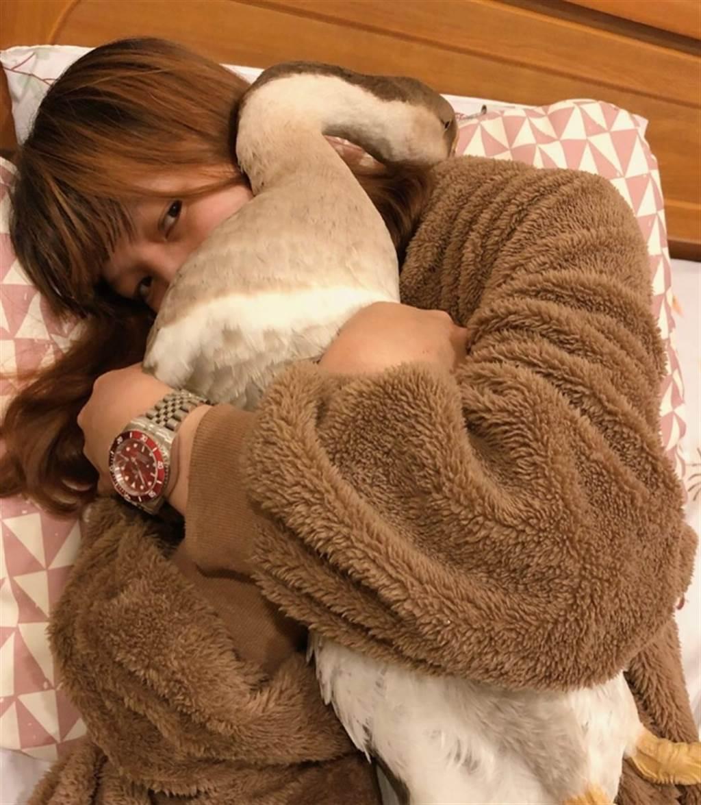 LuLu與女鵝糖糖感情相當好,甚至會和牠同床共枕。(照片/LuLu 提供)