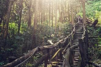 「瞧一橋」大坑風景區景觀橋 登步道、賞花、吃美食