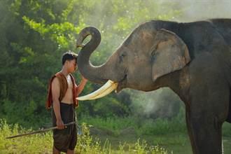 12年前瀕死大象巧遇獸醫 一眼認出救命恩人伸鼻示好