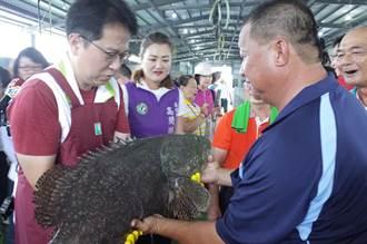 不畏疫情打擊 綠委邱志偉致力石斑魚外銷拓展