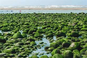 老梅與苗栗苑裡都有季節性 「抹茶氣泡水海岸」美景