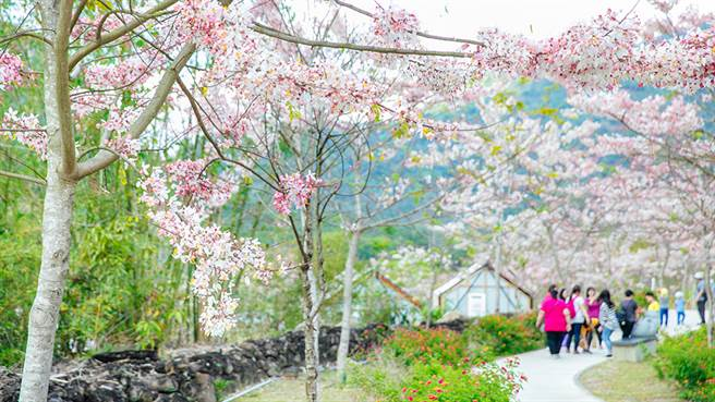 春暖花開正是賞花好時節。(攝影/蔡嘉瑋)