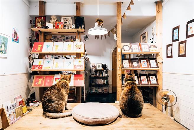 閱覽室書架上陳列藝術、文學類書籍和雜誌,在貓的陪伴下享受閱讀時光,沉澱心情。(攝影/陳建豪)
