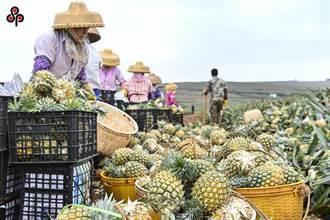 大陸祭農林22條攬人才 農委會坦言難擋退休人士赴陸