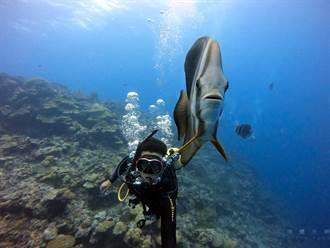 KKday數據揭密》帛琉旅遊泡泡啟動 這些人超想出國去