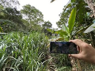 特殊植物為證 檢警破獲6年前盜挖2公噸、市值64萬牛樟樹頭