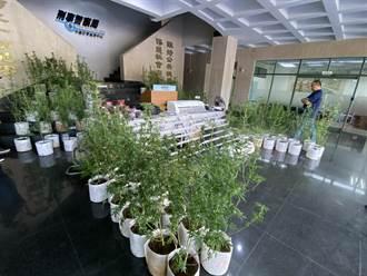 犯嫌以飲料店掩護種植大麻 警方破獲市價逾億大麻溫室
