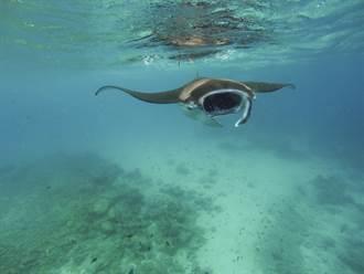 捕捉衝浪拍到大海怪躍出水面 現身瞬間專家驚呼