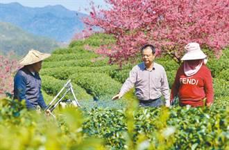 台灣人在大陸》台灣辣椒大王與農林22條