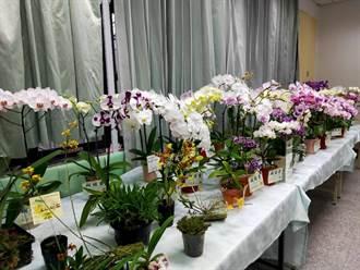 慶祝母校百歲生日 中營國小校友千株珍貴蘭展邀客賞花