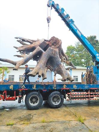 鹿野廢棄廠藏2噸牛樟木 驚破6年前盜伐案