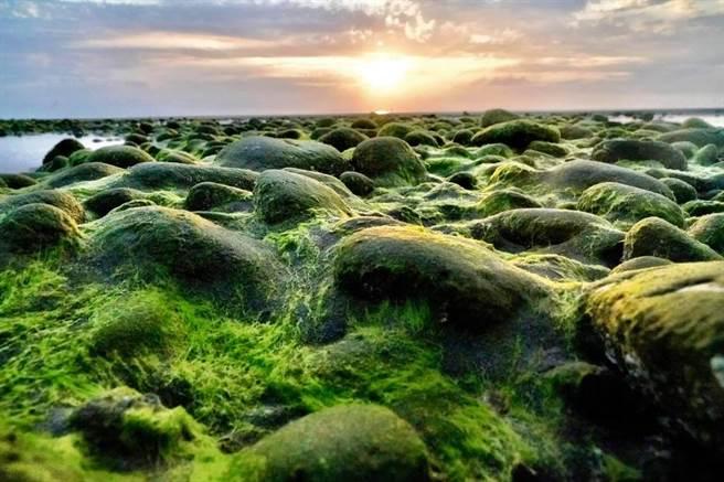 苗栗縣苑裡鎮西平里「抹茶石海岸」,今年因氣候因素提早報到,退潮時可見潮間帶石頭布滿綠藻。(民眾提供/巫靜婷苗栗傳真)