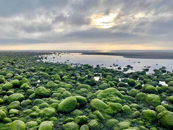 苑裡西平里出水海岸線「抹茶石海岸」提前報到,綿延約200公尺的抹茶海岸線,宛如散落海岸邊的綠寶石。(民眾提供/巫靜婷苗栗傳真)