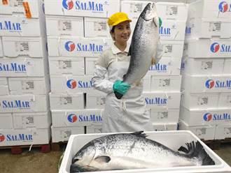 「鮭魚」好康第二波 台灣鯛生態創意園區憑身分證限量送100尾