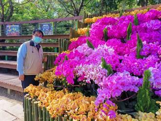 台灣國際蘭展遍地開花 台南推出4條遊程串聯景點吸客