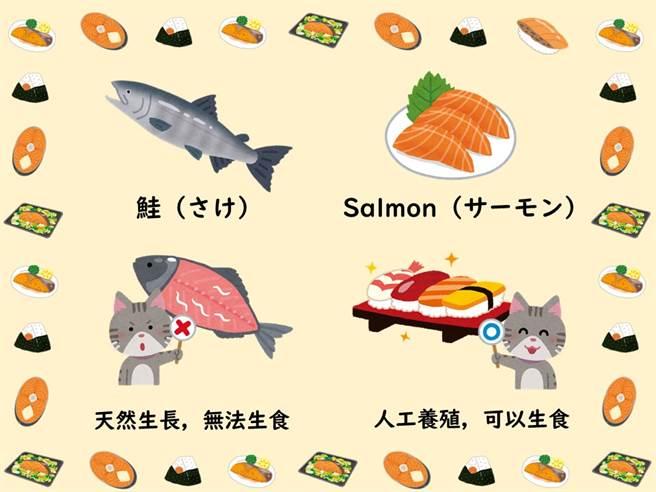 日台交流協會也搭上這波鮭魚熱,揭露有關鮭魚的冷知識。(圖擷自日台交流協會)