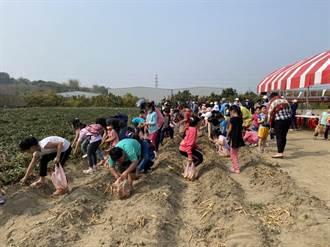 食農體驗這樣玩 焢窯的地瓜是半年前自己種的