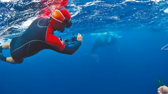 《男人與他的海》邀學子免費賞鯨豚