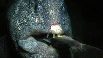 漁夫意外釣起巨鰻大海怪  猙獰張嘴現獠牙眾人驚呆