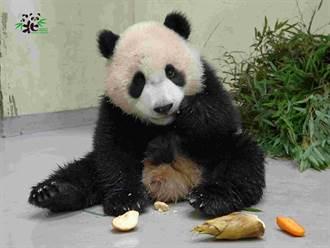 圓寶挑食見紅蘿蔔秒裝忙 保育員親手餵 露一號表情拒絕