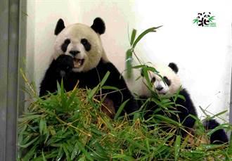 大陸人看台灣》逛台北動物園很超值
