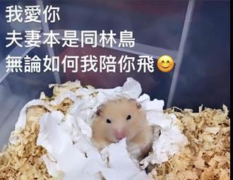 3月分享求婚喜悅 殉職飛官羅尚樺妻PO文「我陪你飛」