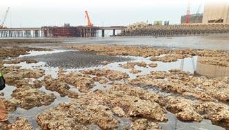 潘忠政喊話政府 速辦聽證會找藻礁爭議解方