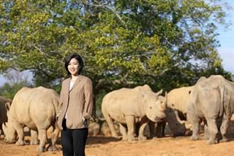 六福復育白犀牛 日本跨海來提親