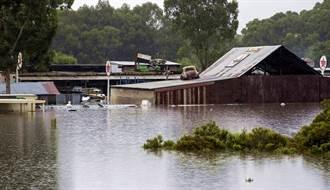 影》澳洲洪水嚇死人 數千蜘蛛逃竄她家 驚悚畫面曝光